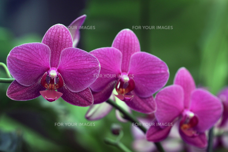 plants_flowers FYI00836846