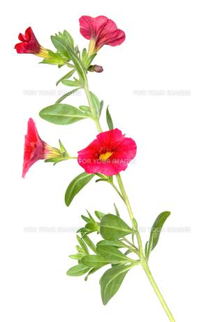 plants_flowers FYI00847729