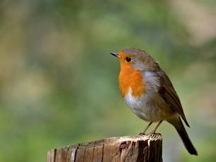 birds FYI00870157