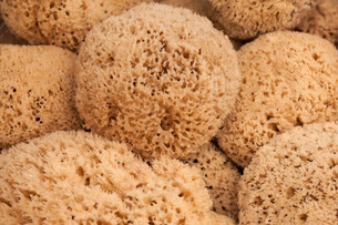 several natural sponges FYI00879225