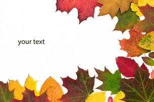 autumnal yourtext FYI00881940