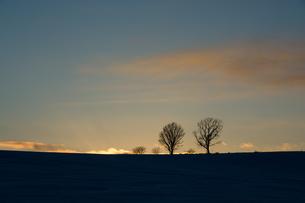 冬の夕暮れの丘に立つ冬木立 FYI00885720