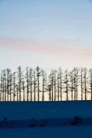 夕暮れの空と冬の丘 FYI00885726