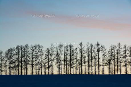 夕暮れの空と冬の丘 FYI00885729