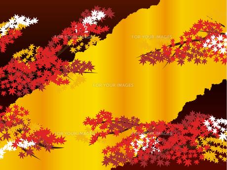 秋の和柄紅葉 Fyi00885915 気軽に使える写真イラスト素材