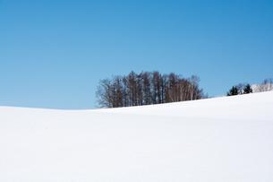 冬晴れの青空と丘の上のカラマツ林 FYI00886324
