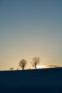 夕暮れの丘に立つ冬木立 FYI00886424