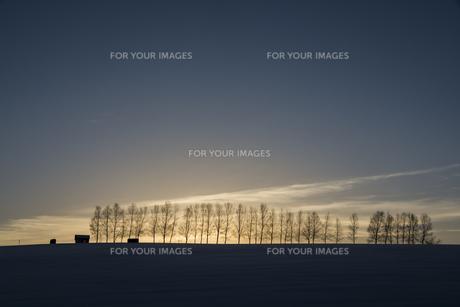 夕暮れの空と冬の並木 FYI00886427
