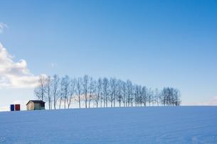 冬の青空とシラカバ並木 FYI00886445