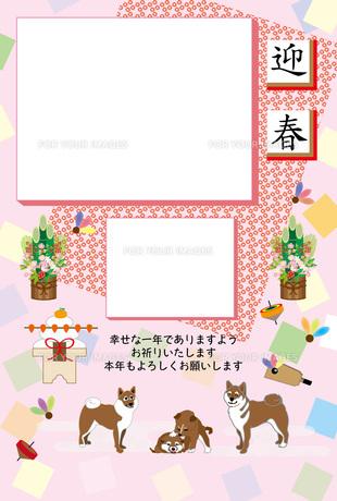 柴犬の家族と門松の和風写真フレームの年賀状テンプレート FYI00888211
