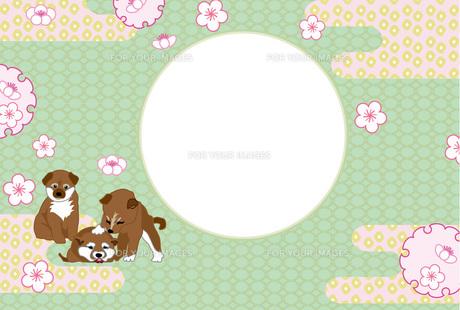 柴犬の子犬と梅の花のイラストの和風な写真フレームのはがきテンプレート FYI00888615