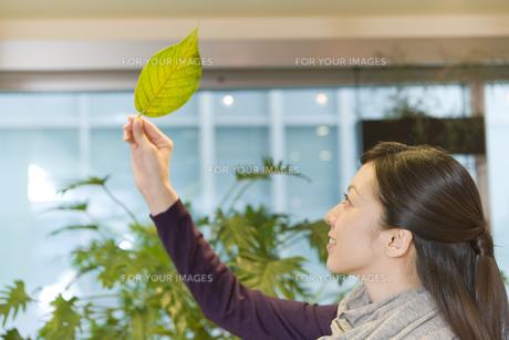 葉っぱを手に持った女性 FYI00913623
