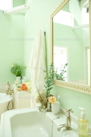 ユーカリとシッシングハーストローズマリーを飾った洗面所 FYI00914763