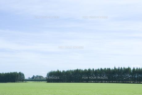 空と草原 FYI00919329