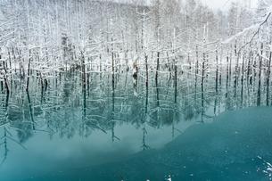 冬の湖 美瑛町 FYI00921442