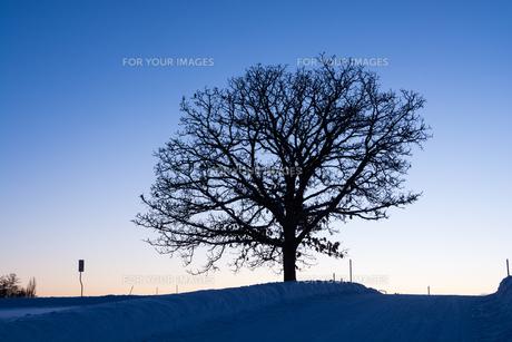 夕暮れ音空と冬木立 FYI00923397