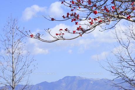 木の実 FYI00932380