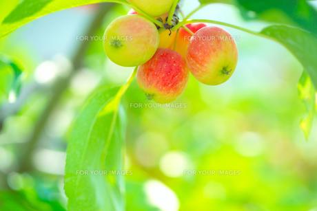 木の実 FYI00932528