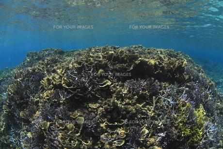 慶良間諸島 ラムサール条約登録海域のサンゴ群の素材 [FYI00934075]
