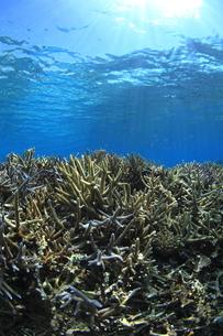 慶良間諸島 ラムサール条約登録海域のサンゴ群 FYI00934125