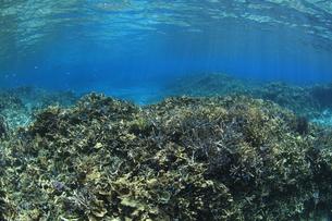 慶良間諸島 ラムサール条約登録海域のサンゴ群の素材 [FYI00934157]