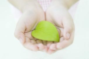 新緑の葉を持つ手 FYI00934604