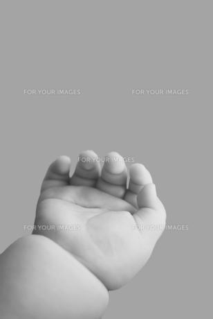 赤ちゃんの手 FYI00934791