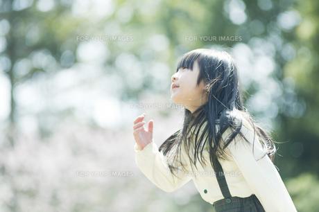 見上げる女の子 FYI00934856