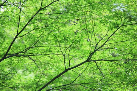 新緑イメージ FYI00939500