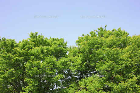新緑 FYI00939545