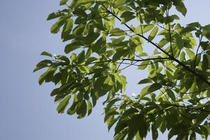 新緑の葉と青空 FYI00939877