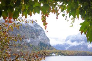 紅葉した蔦の葉とハルシュタット湖の素材 [FYI00940232]