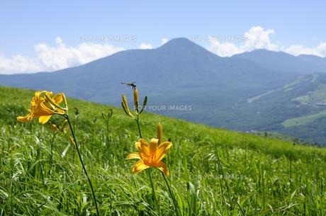 蓼科山とキスゲの花の素材 [FYI00940307]