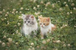 野原の子猫2匹 FYI00941088