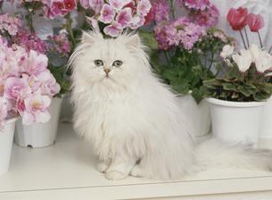 花の鉢植えとネコ FYI00941099