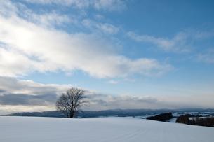 雪原に立つ冬木立 美瑛町 FYI00941843