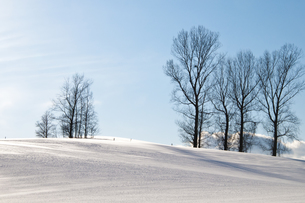 冬晴れの空と雪原 FYI00941857