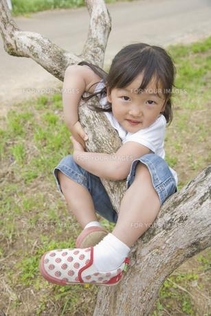 木に登る女の子の素材 [FYI00943921]