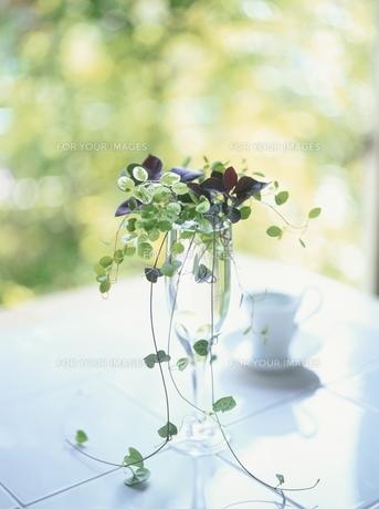 花瓶のグリーンとカップ FYI00944499