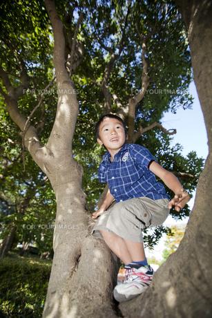 木に登る男の子 FYI00944635