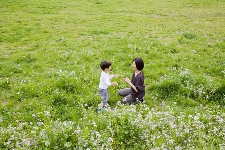 野原で遊ぶ親子の素材 [FYI00944965]