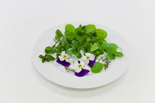 お皿に盛られたたハーブの素材 [FYI00944991]
