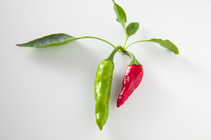 葉がついた緑と赤色のししとうの素材 [FYI00945478]