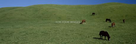 馬の牧場風景 FYI00952835