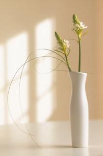 生けられた花 FYI00959812