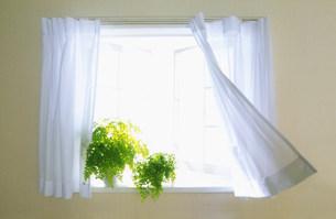 風のそよぐ窓辺 FYI00959943
