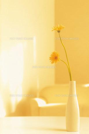 花瓶の花 FYI00960503