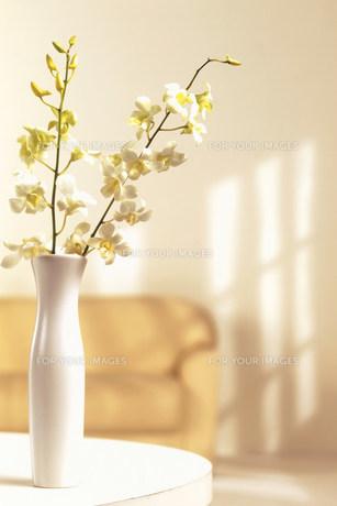 花瓶の花 FYI00960504