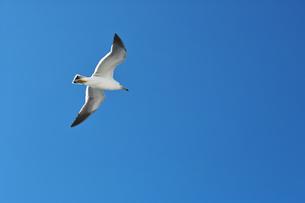 青空に飛ぶカモメ FYI00969008