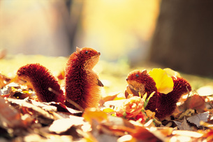 秋の落ち葉とリスの模型 FYI00969276
